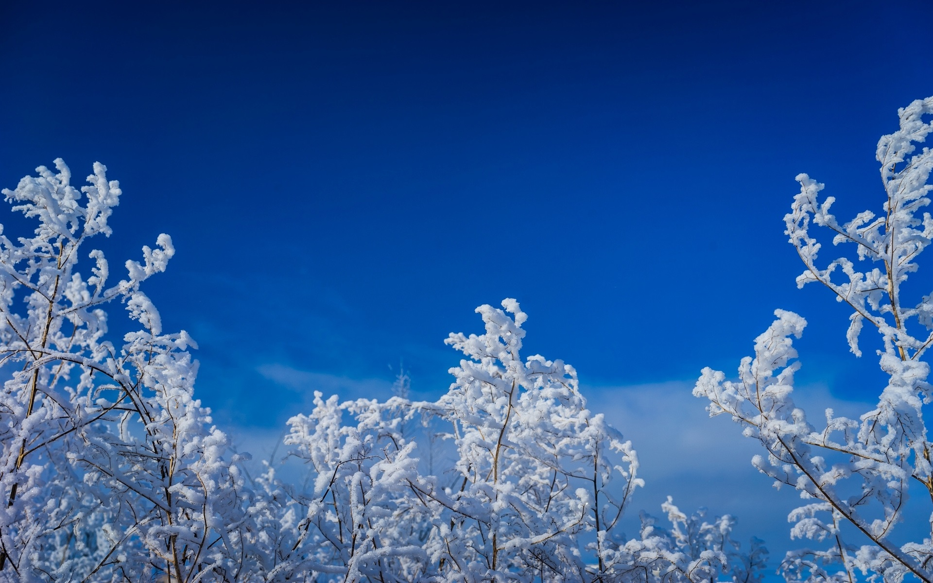 Twigs-tree-snow-blue-sky-winter_1920x1200.jpg