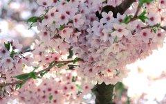 Spring-flowers-spring-22176405-2560-1600.jpg