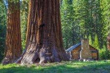 Sequoias3.jpg